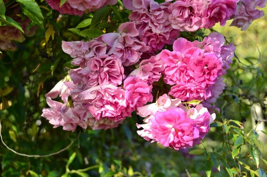 Tree Elle Retreat : Flowers in bloom