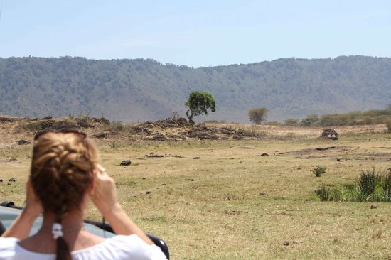 andBeyond Ngorongoro Crater Lodge: Lunch with the lions - looks farther away than it was