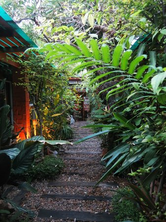 P.Y. Guest House: le jardin / garden