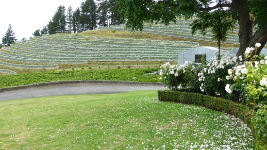 Vines and Views Tours : View of a winery built on a hill with great views