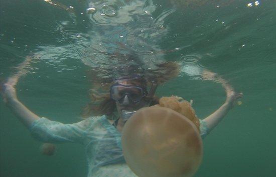 Non-stinging jellyfish Kakaban - Picture of Maratua