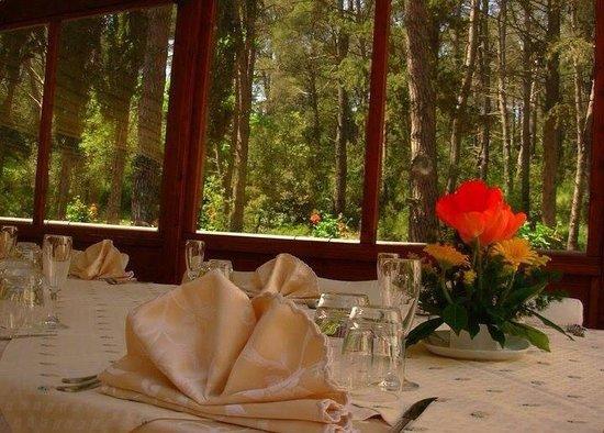 La Selva di Diana : Vista sulla foresta...relax!!!