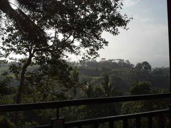 Ashoka Tree Resort Ubud: .