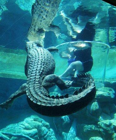 Crocosaurus Cove : Cage of Death
