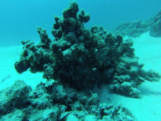 Divers'Ocean : 20 m de profondeur