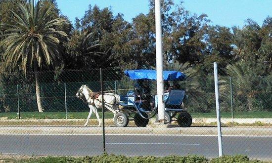Djerba Golf Club: Shuttle Service