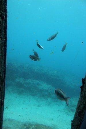 Miyakojima Marine Park: 海中展望室からの眺め