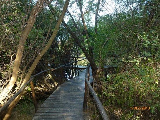 Chandelier Game Lodge & Ostrich Show Farm: Zugang zum Zelt