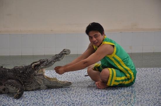 Baan chivit crocodile show: прием