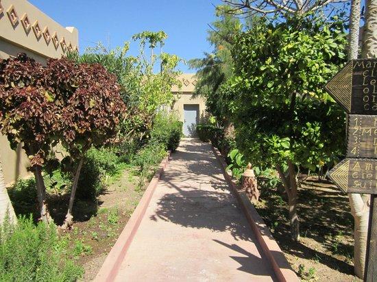 Hotel Dar Zitoune: path thru citrus trees to room