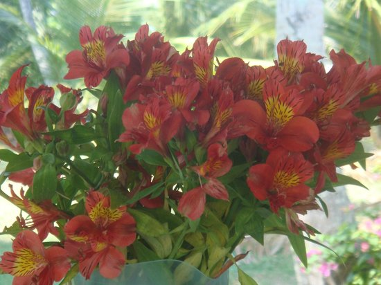 Chitra Ayurveda : Beautiful flowers on the breakfast table every day