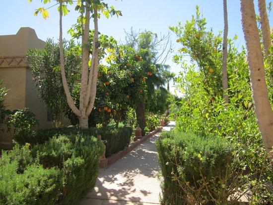 Hotel Dar Zitoune: citrus groves
