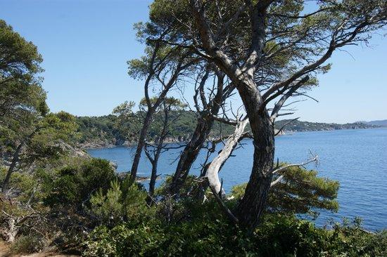 Camping Clair de Lune : Presqu'ile de Giens