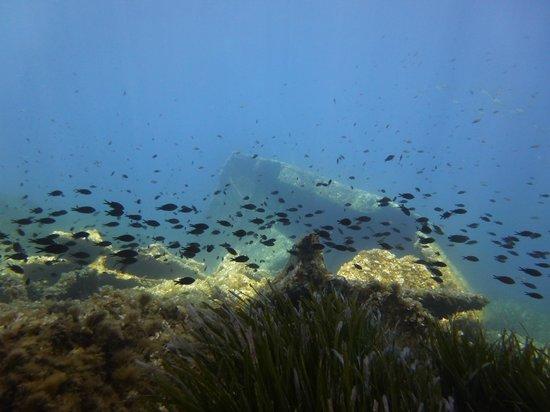 Camping Clair de Lune : Plongée sous marine
