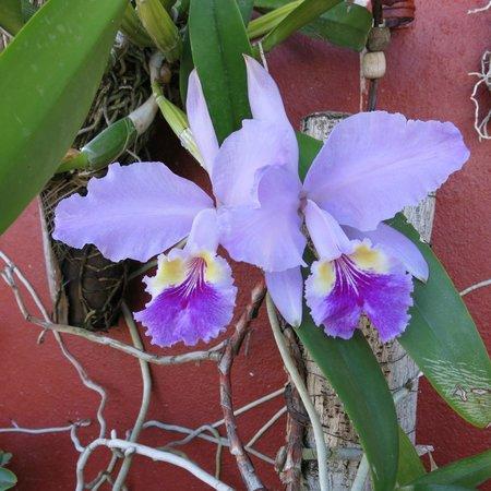 Houses, Alexis and Mary No 1 and No 2: Orquideas de Mary.. Adora las flores