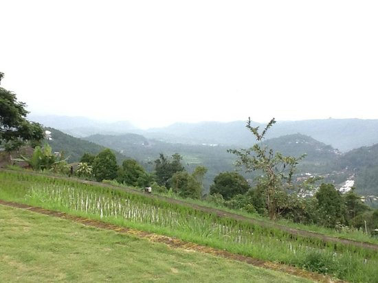 Puri Lumbung Cottages : View from the bar