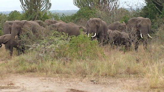 African Pearl Safaris: Elephants