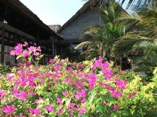 Leopard Beach Resort & Spa : lobby