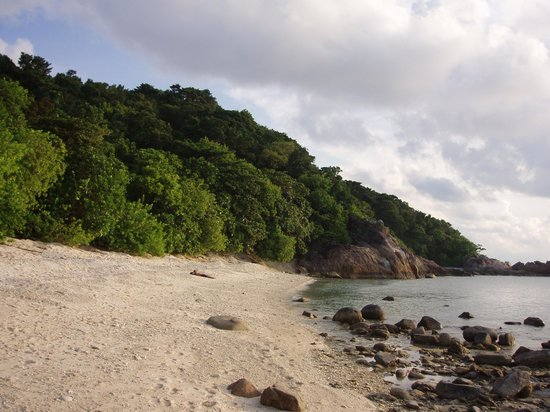 D'Lagoon : Turtle Beach (good for afternoon and sunset + morning dive)