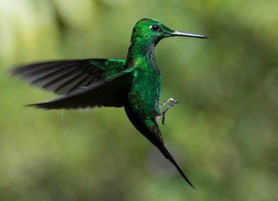 Bosque de Paz: Hummingbird