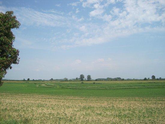 Agriturismo Boaria Bassa: Rice fields