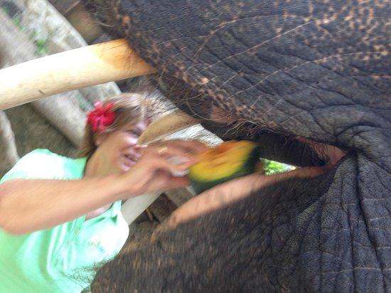Elephant Junction - Day Tours: Mora likes papaya