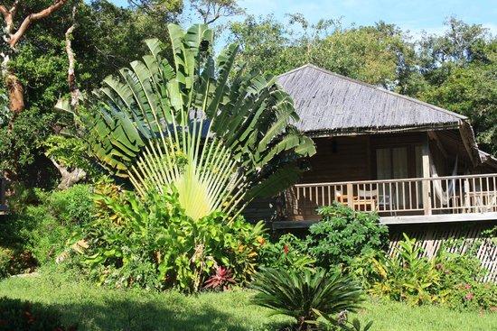 Media Luna Resort & Spa : Fan palm