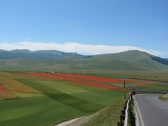 Piana di Castelluccio di Norica: Piana di Castelluccio di Norcia  |   Castelluccio di Norcia , Italia