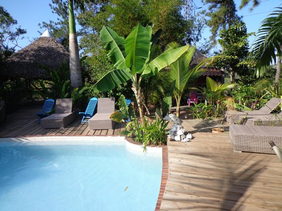 Monkey Lodge Panama: Piscine