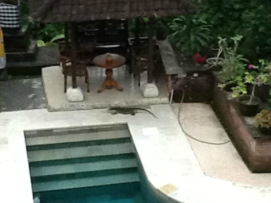 Kebun Indah : Looking down on the pool from Cempaka.... and a new friend