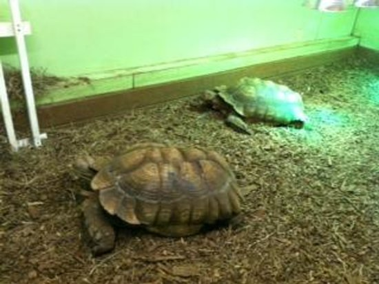 Great Lakes Zoological Society : Tortoises