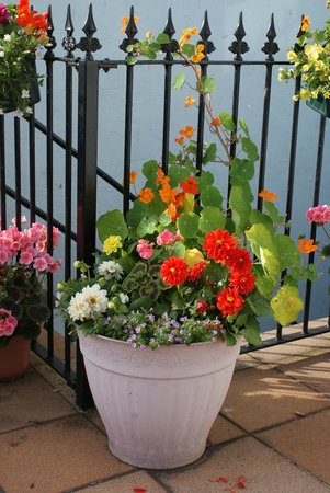 The Croft: The Flower tubs in Summer