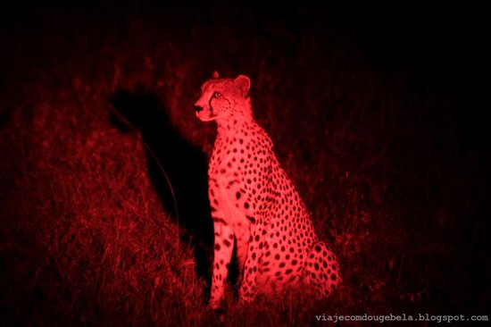 Naboisho Camp, Asilia Africa : See what we saw in the night Safari