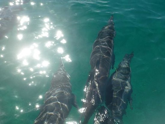 Bay Islands Adventures : We were very lucky to experience this on our Bay Island Adventure Island Tour