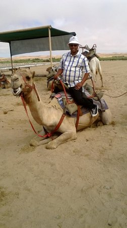 Walvis Bay, Namibya: Camel rides also feature in the Namib Desert