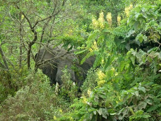 Arusha National Park: arusha N.P.