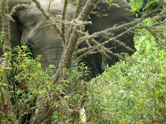 Arusha National Park: elefante