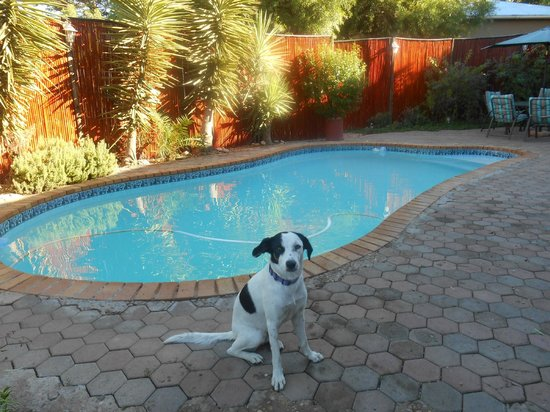 Karoo Life Bed & Breakfast: Trevor's dog posing in front of the pool