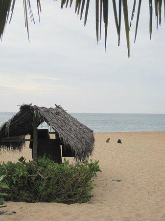 Mangrove Beach Cabanas & Chalets: Restaurant-Ausblick
