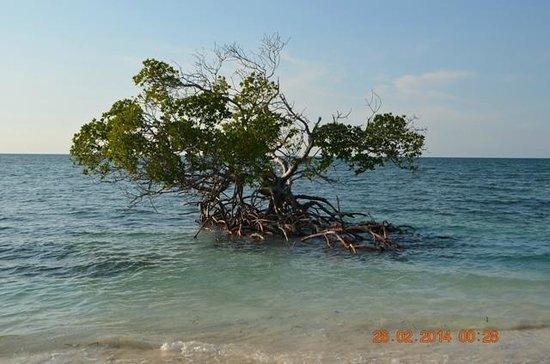 Hotel Cayo Levisa: mangrovia