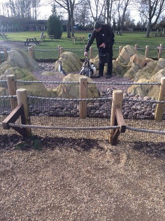 Twycross Zoo : Very close to penguins on their feed