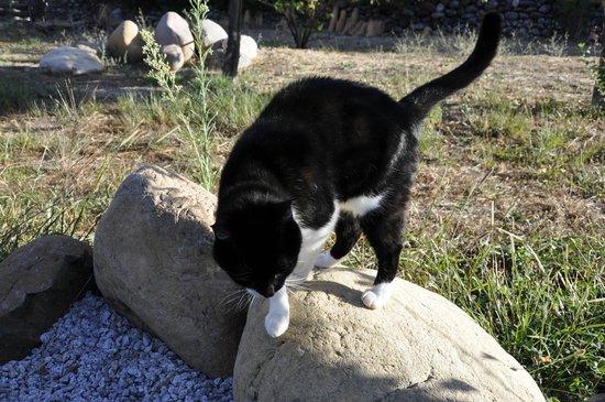 La Casaloha: Le chat de l'hôte