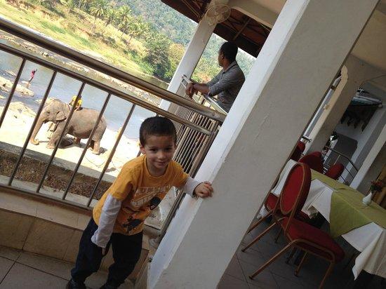 Hotel Elephant Park: Happy elephants
