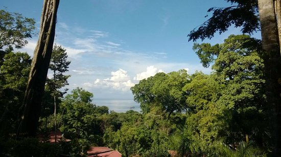 Mar y Selva Ecolodge : The View