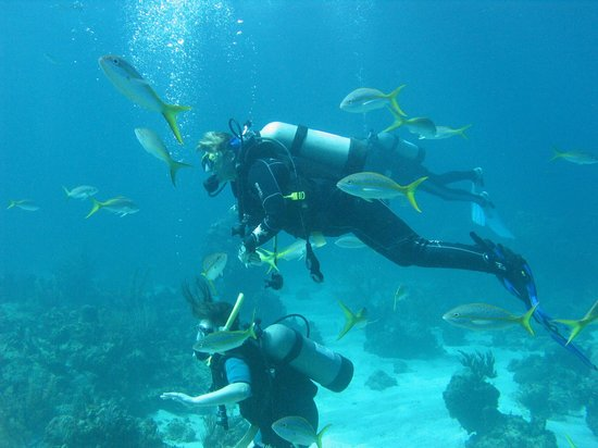 Dive Abaco! : Like Swimming in an Aquarium!
