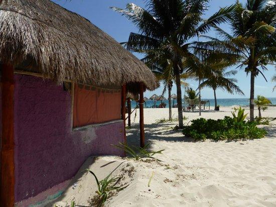 Eco Cabanas Pirata Morgan : Vista desde la cabaña 3