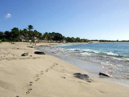 Oasis Creole: Baie aux Prunes beach