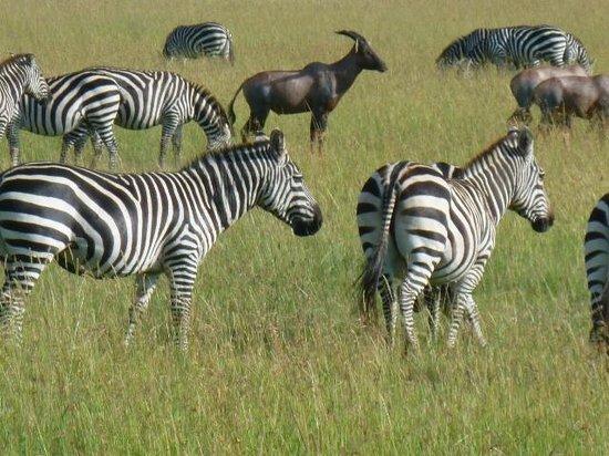 Eyes on Africa Safaris: Black and White