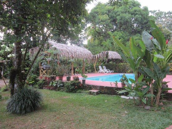 Hotel El Mono Feliz : Pool