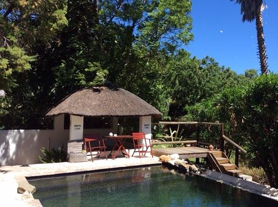 Mimosa Lodge: the pool
